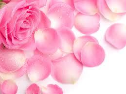 pinkrosepetals